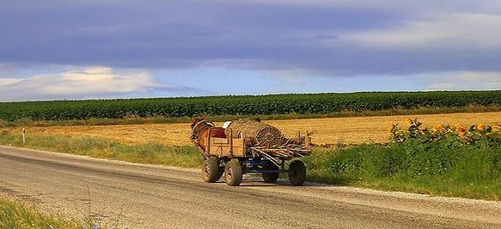 Лошадь с повозкой стога на дороге Турция