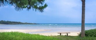 Песчаный пляж и сосны