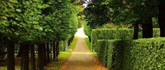 где погулять в садах и парках в питере