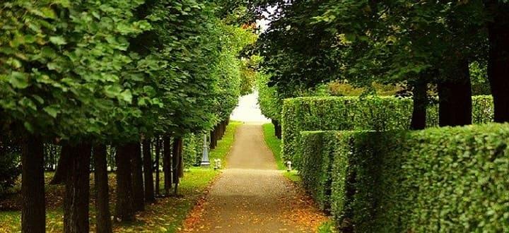где погулять в СПб-сады и парки